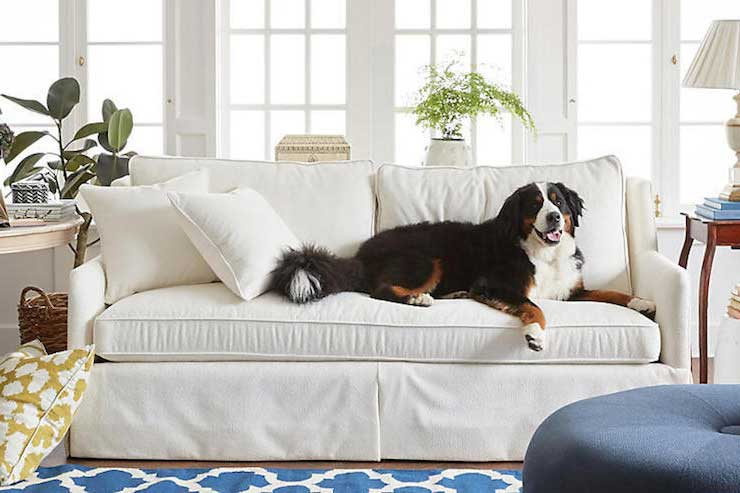 Family Friendly Fabrics Furniture Dog
